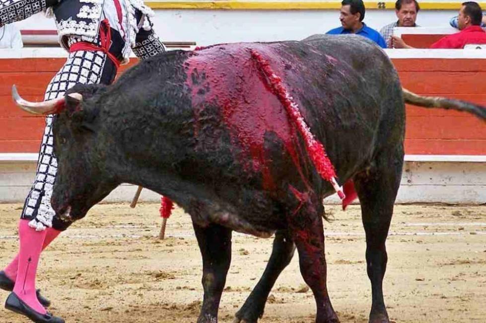 Ninguna tradición del mundo actual debería justificar la crueldad
