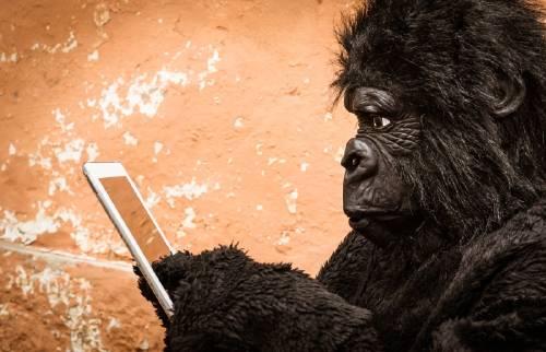 Tu adicción a internet está dañando a los animales: entérate cómo