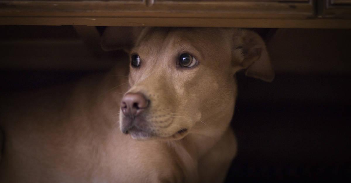 Los perros tienen una habilidad sobrenatural que nunca te hubieras imaginado...