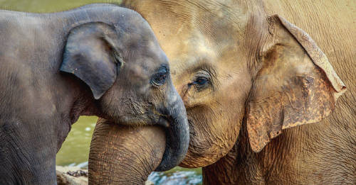 El polémico motivo por el que Botsuana volvió a permitir la caza de elefantes