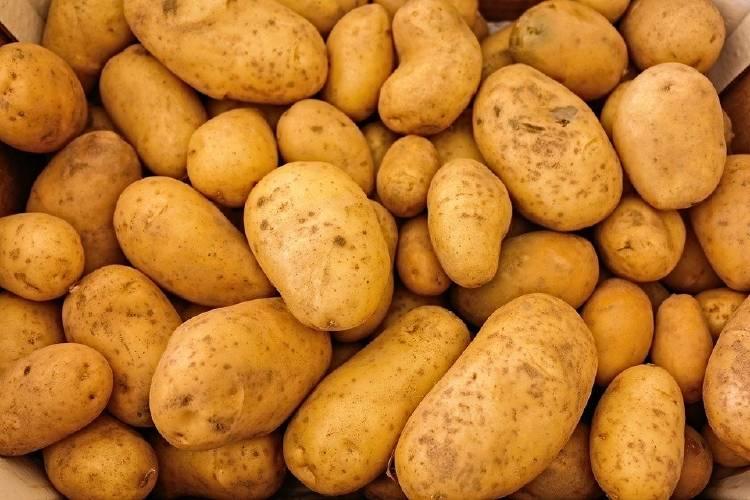 papa patata tubérculo vegetales