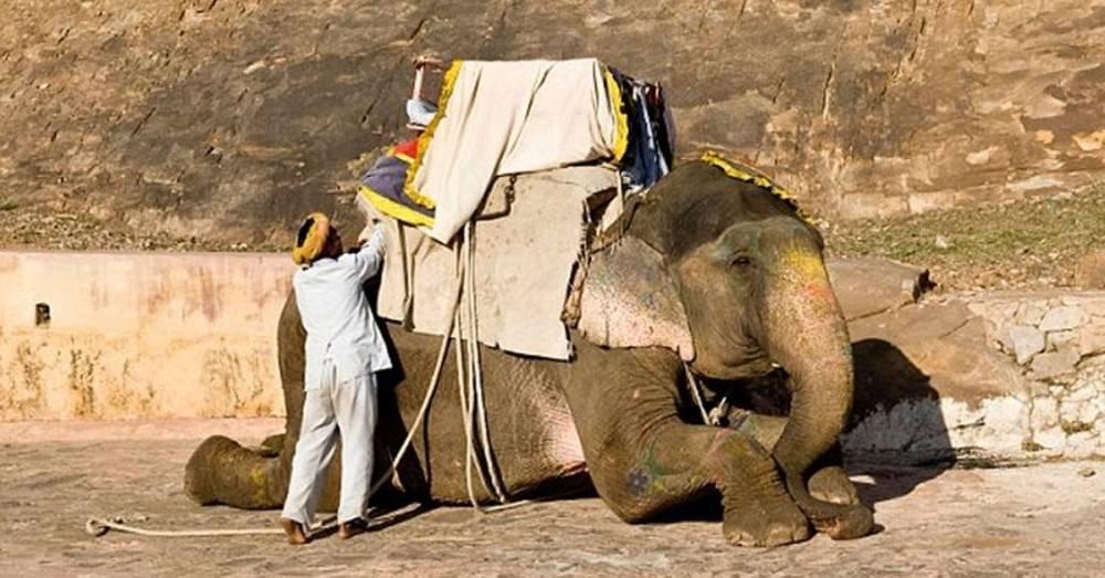 ¿Por qué somos ta crueles? Esta es la realidad tras los paseos en elefante e..