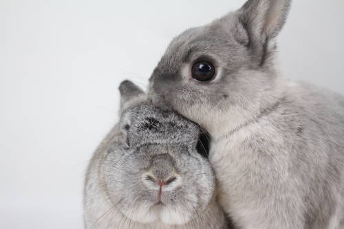 Cruelty free: qué significa que una marca sea libre de crueldad