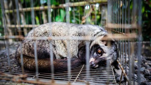 Ante la pandemia, piden el cierre de los mercados de animales en Asia