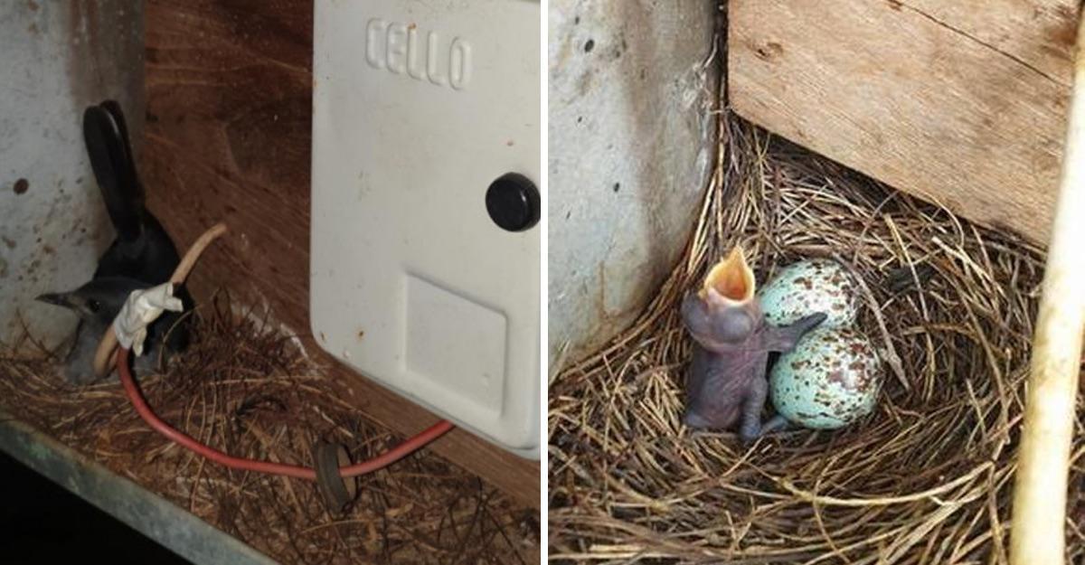 Pueblo en India apaga sus luces durante 35 días para salvar el nido de un ave