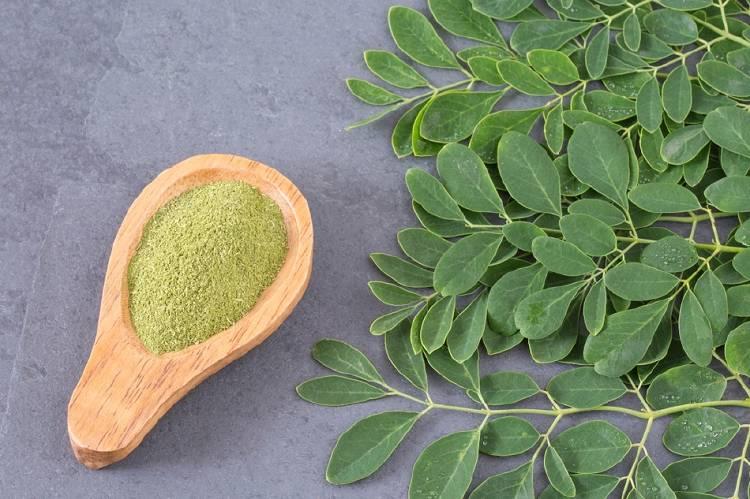 moringa planta medicinal  1