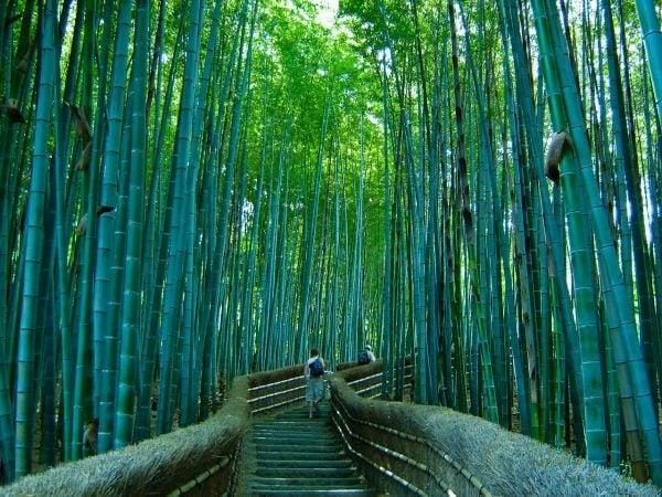 bosque-de-bambu3