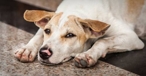La tierna imagen de los cuatro perros que esperan a su dueño, un hombre indigente, a las puertas del hospital