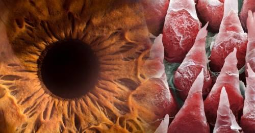 Estas imágenes demuestran que el cuerpo humano es una verdadera locura
