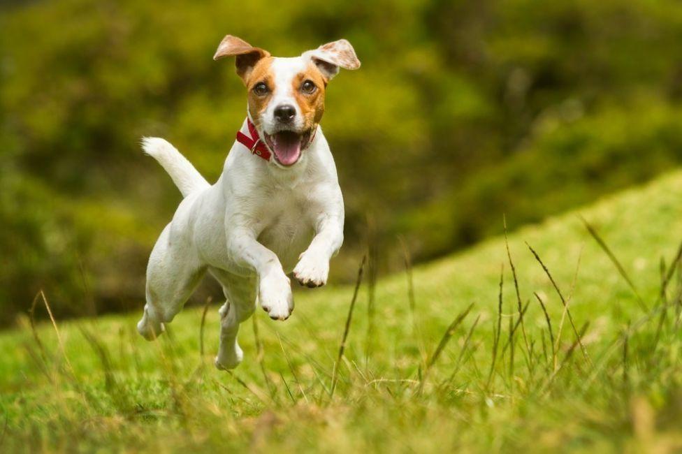 trucos para educar a un perro travieso