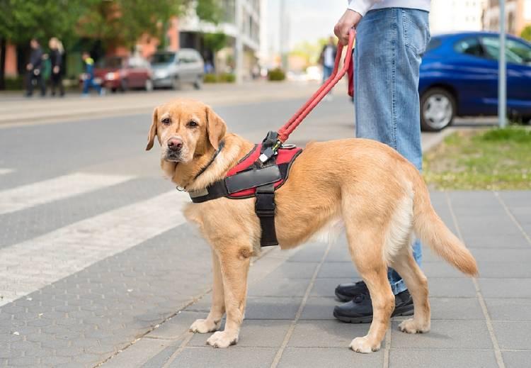 perro con correa en la calle acompañado de dueño