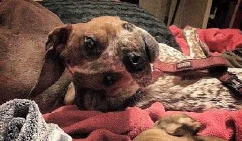 ¿Qué le sucede a este perro? Esta imagen te dejará perturbado