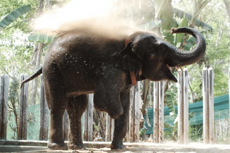 elefante sin pata