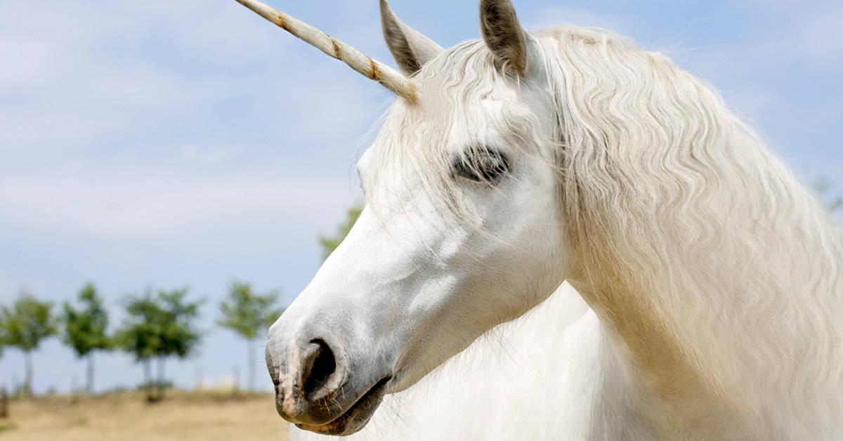 Científicos hallaron un fósil que confirma que los unicornios existieron
