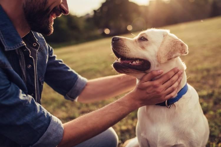 El perro que espera a su dueño fuera del hospital