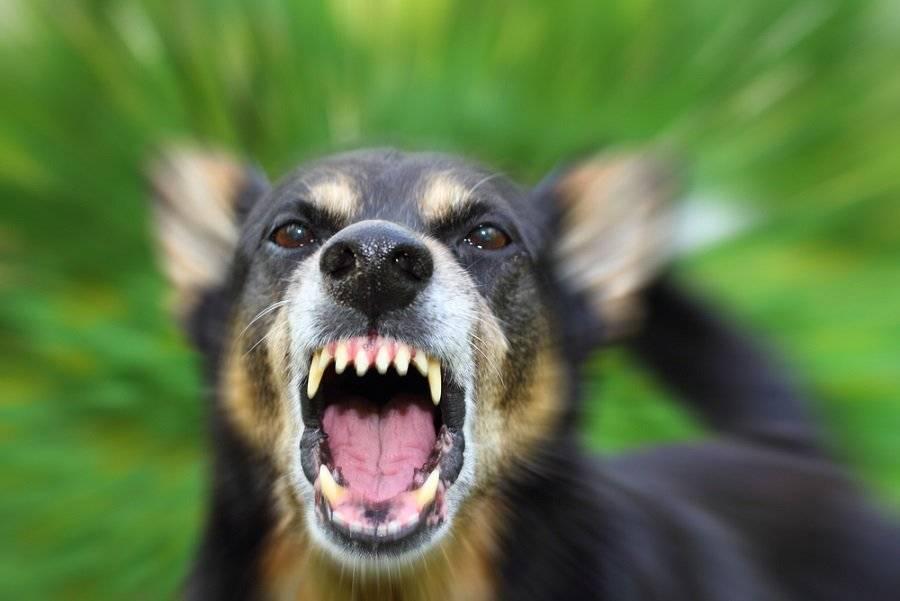¿Qué debes hacer si te muerde un perro?
