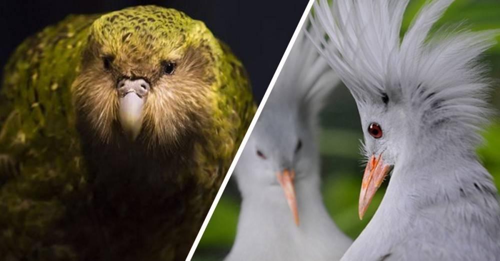 5 aves hermosas que están apunto de desaparecer por culpa del hombre