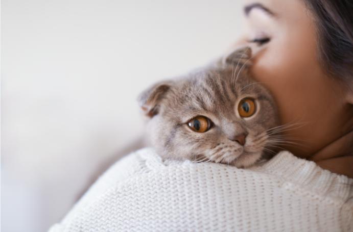 Estudio demuestra que el apego de los gatos a los dueños es similar que el de los bebés a los padres