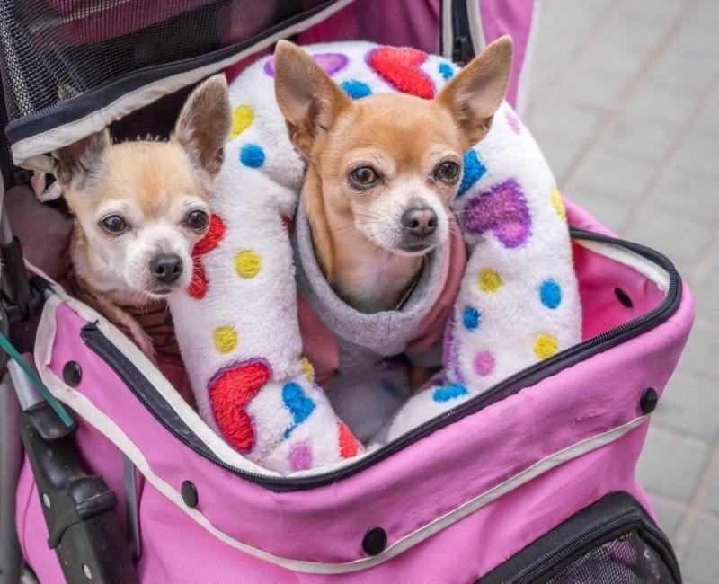 Los niveles subclínicos de dolor y tristeza son respuestas humanas relativamente comunes a la muerte de mascotas / animales de compañía