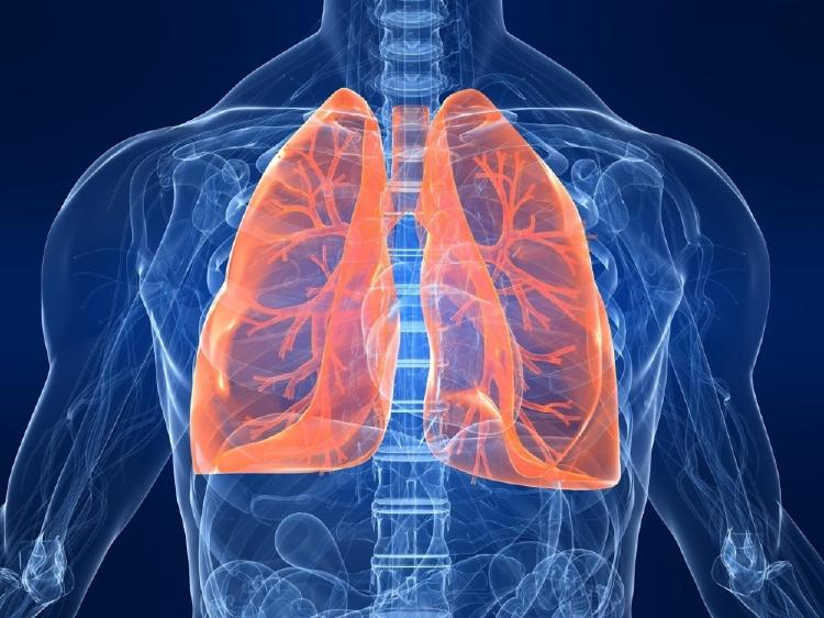 9 hierbas para limpiar los pulmones y respirar mejor