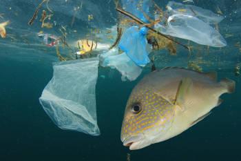 Donó su fortuna para construir un yate que juntará la basura de los océanos