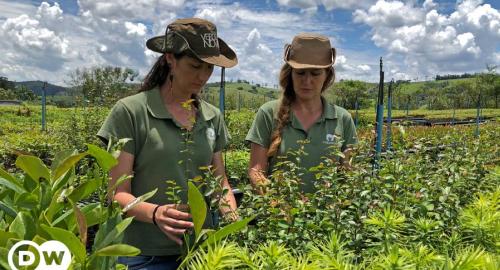 Dos hermanas brasileñas plantan árboles para recuperar la selva