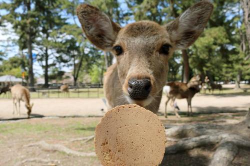 En Japón, crean bolsas comestibles para evitar que los ciervos ingieran plástico