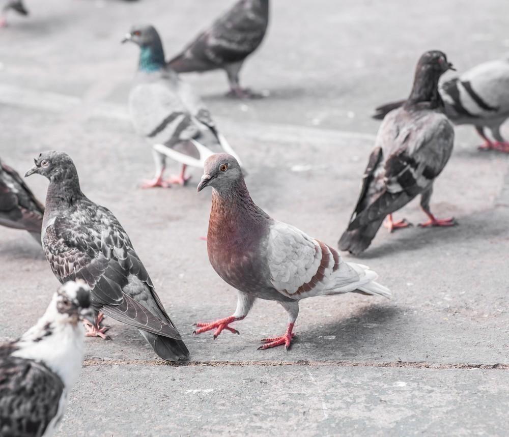 Como alejar roedores palomas y murci lagos del hogar sin hacerles da o - Como alejar las ratas de la casa ...
