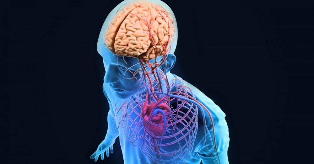 3 funciones de tu cuerpo que no sabías que eran controladas por las ...