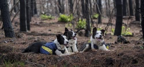 Estas tres perritas no lo saben, pero están resucitando un bosque incendiado