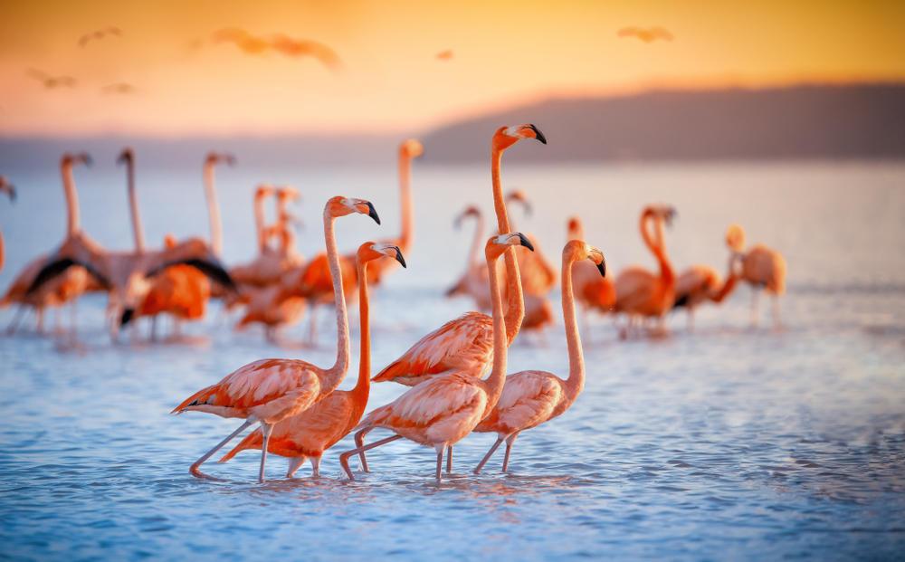 El Lago Nakuru, un paraíso para los flamencos en el continente africano