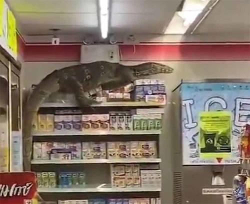 Lagarto gigante ingresó en un supermercado tailandés y causó terror entre los cl