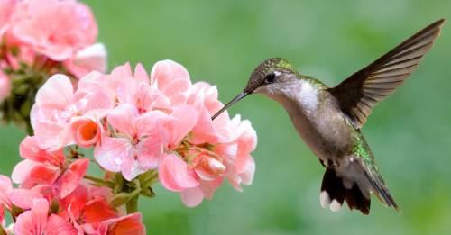 La historia de este colibrí te recordará que tú puedes cambiar el mundo