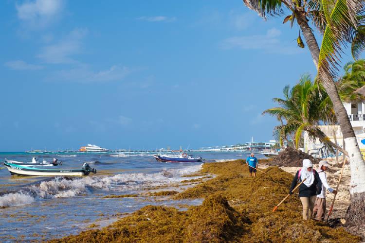 Sargazo en playa del carmen y la suciedad de las playas