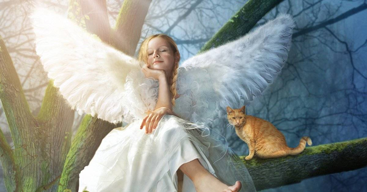 Oración para conectar con tus ángeles cada mañana