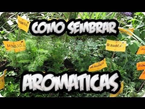 Como sembrar aromaticas en casa