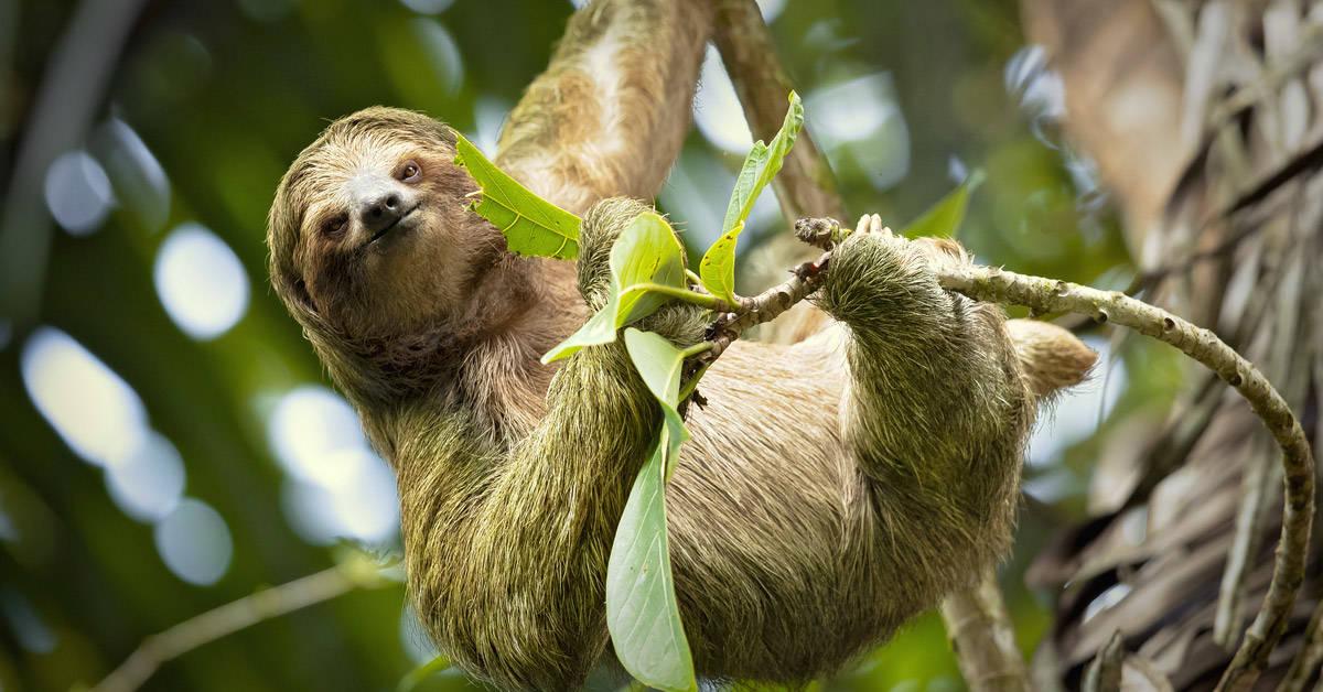 Los animales también sufren los incendios en el Amazonas