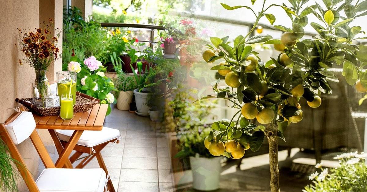 5 tipos de plantas ideales para el balcón