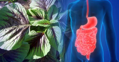 Quelites: plantas mexicanas cuyas propiedades nutricionales la mayoría desconoce