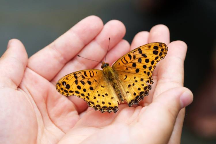 butterfly-4396444_1280