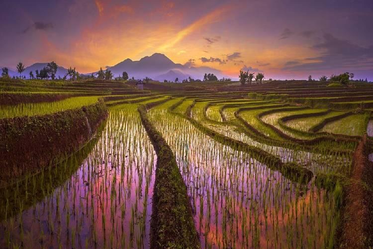 \\\'Beauty morning reflection of red sky, with amazing pattern of terrace rice fields in north bengkulu\\\' por @rahmadhimawan (Indonesia)