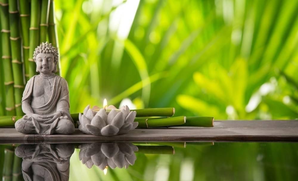 La simbología de las plantas: 5 especies que atraerán riqueza y vibras posit..