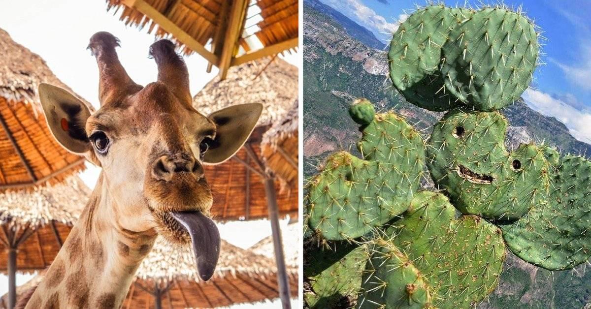 10 fotos que prueban lo divertida que es la naturaleza
