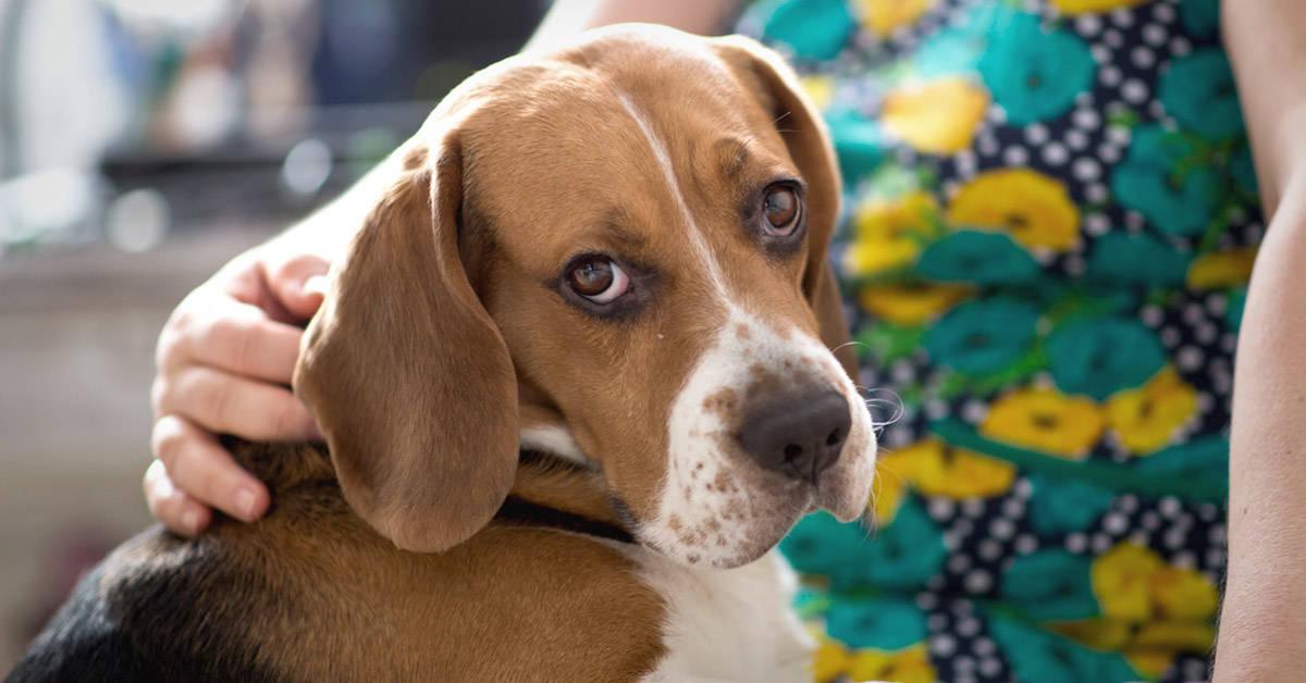 Especialistas confirman que los perros reconocen las malas vibras