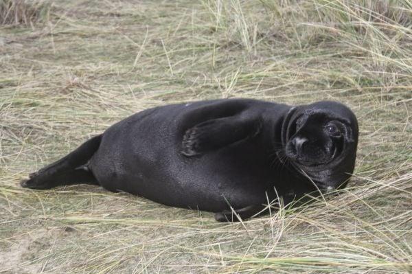 01-01 Black pup