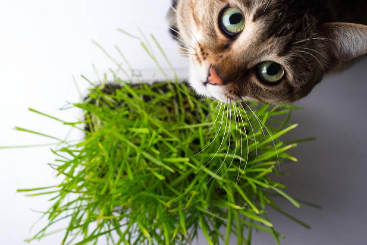 Un gato comiendo pasto