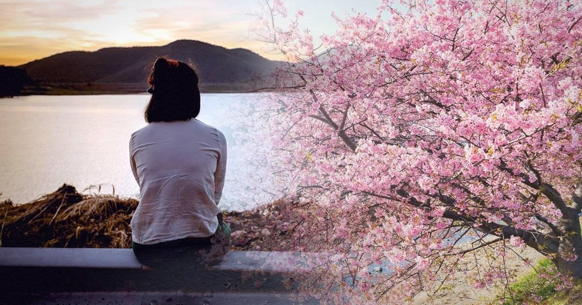 La leyenda del Sakura y un mensaje que no deja a nadie indiferente