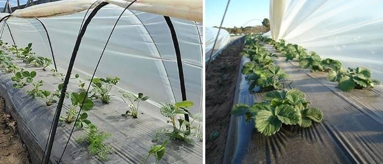 Como hacer un microtúnel para cultivar en invierno