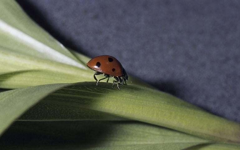 Escarabajos asiáticos: ¿existen? ¿deberías preocuparte porque ataquen a tu..