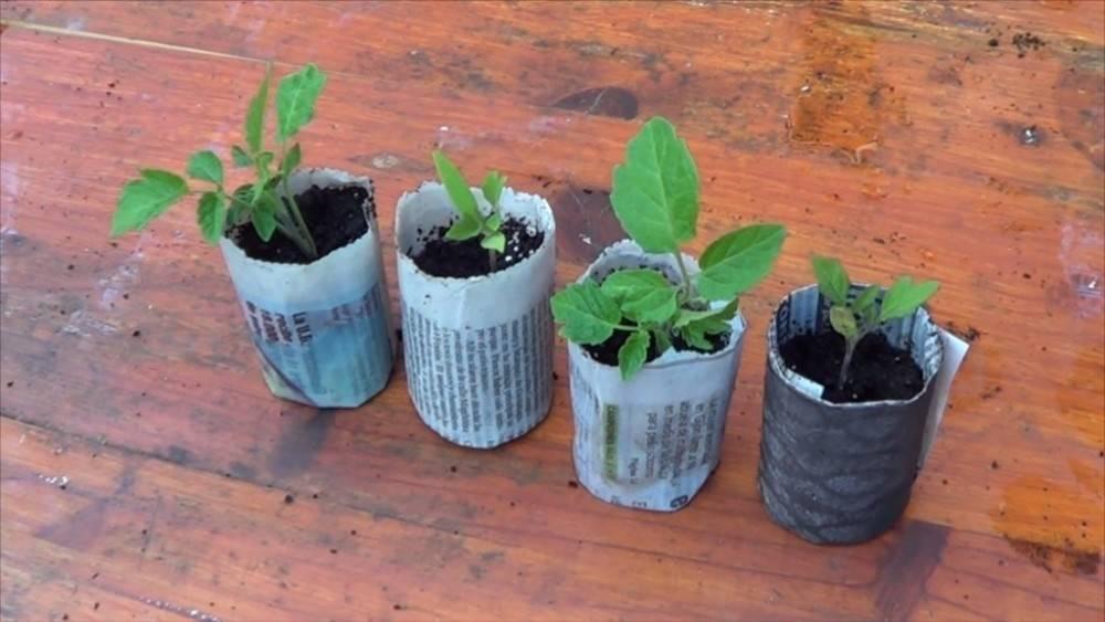 Cómo hacer semilleros reciclados con papel de periódico